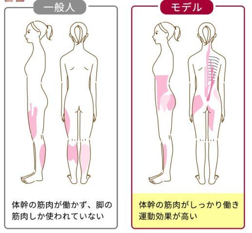 エレスリムでサポートするモデル体幹筋のモデルと一般人の比較
